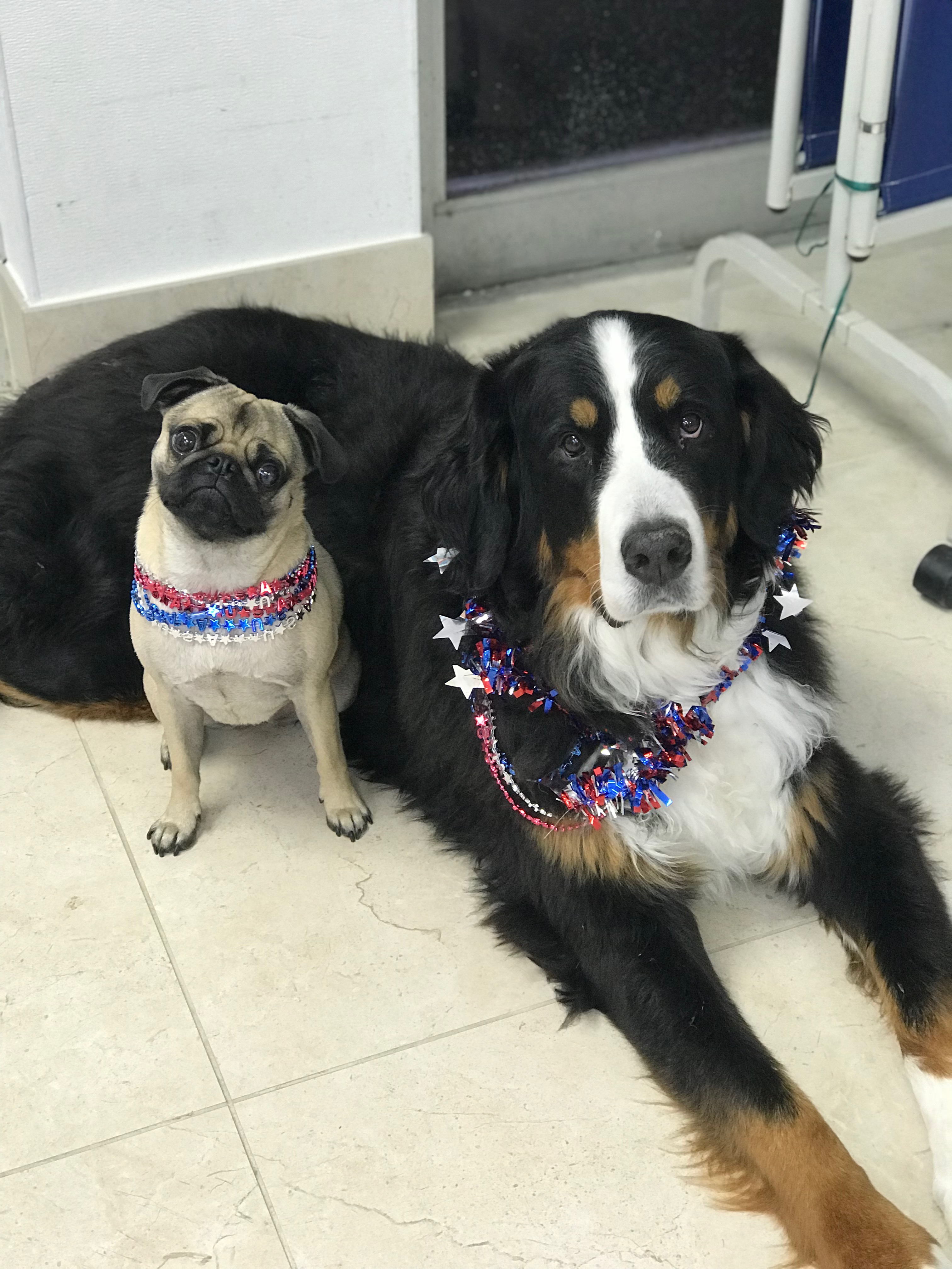 Therapy Dogs